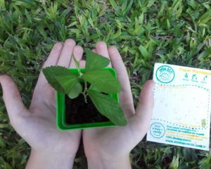 Manos con una planta